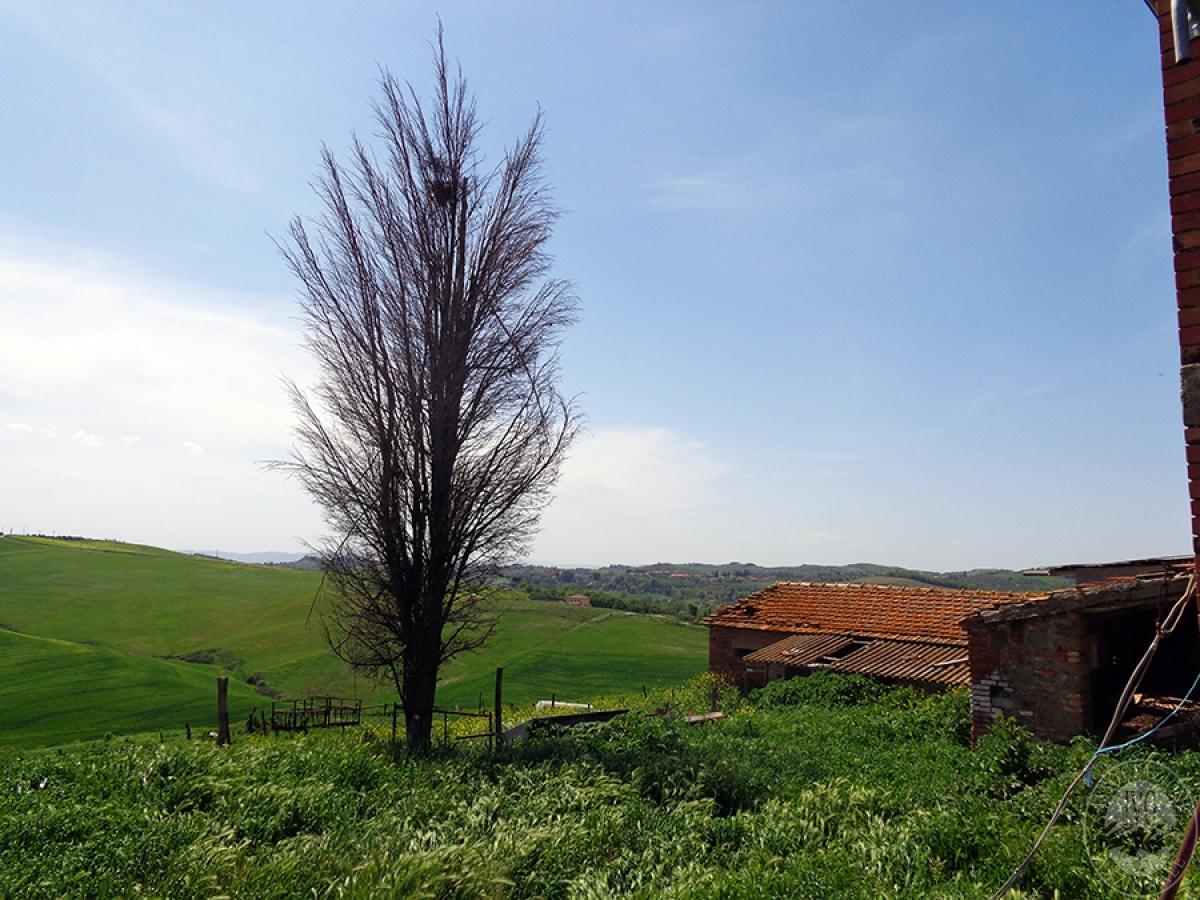 Podere e azienda agricola a MONTALCINO in fraz. San Giovanni d'Asso 3
