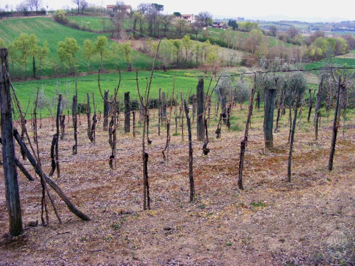 Terreni agricoli in FOIANO DELLA CHIANA in Via Renaia - Lotto 4
