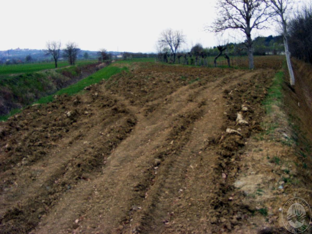 Terreni agricoli in FOIANO DELLA CHIANA in Via Renaia - Lotto 5