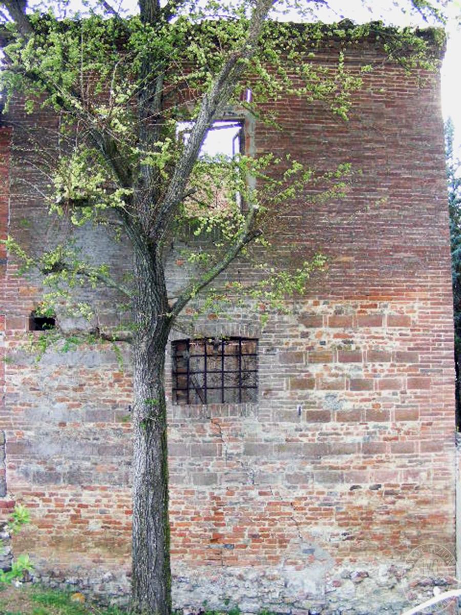 Fabbricati rurali e terreni in FOIANO DELLA CHIANA in Via Renaia - Lotto 2 6