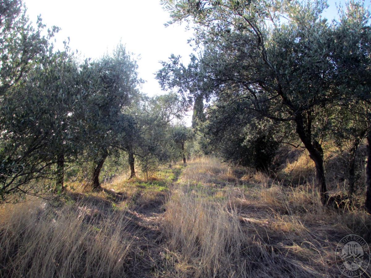 Terreni a CORTONA in loc. San Pietro a Dame - Lotto 2