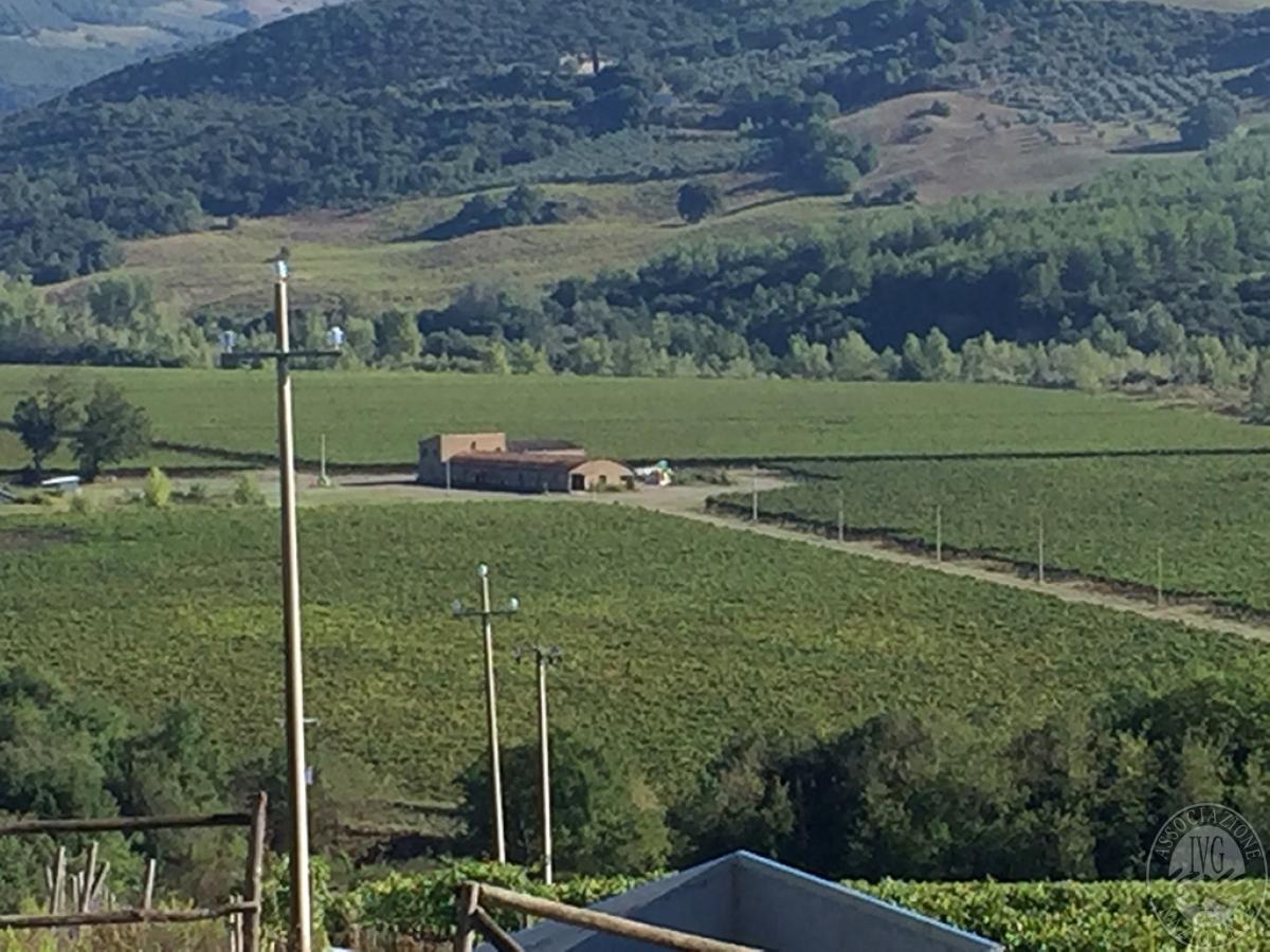 Vigneti e fabbricati agricoli a MONTALCINO in loc. Monte Amiata Scalo - Lotto 1 0