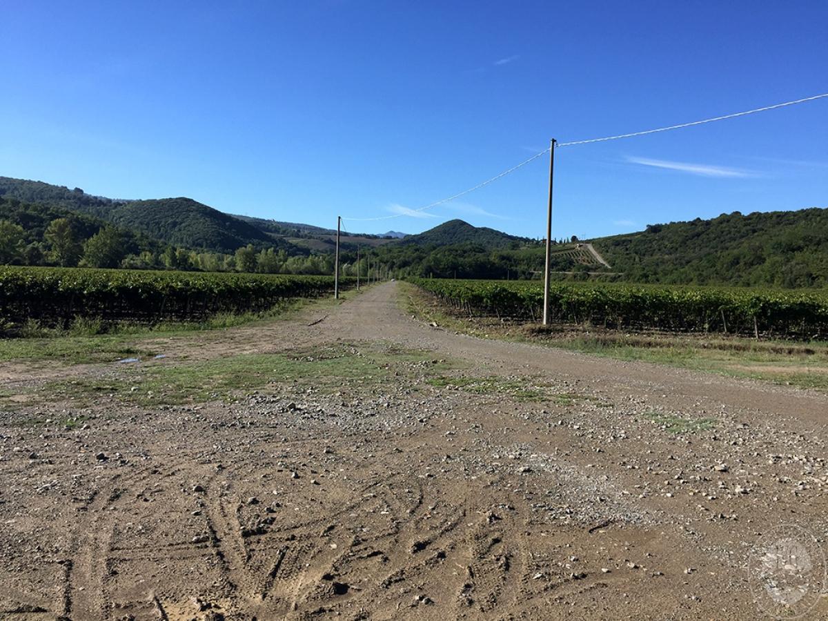 Vigneti e fabbricati agricoli a MONTALCINO in loc. Monte Amiata Scalo - Lotto 1 8