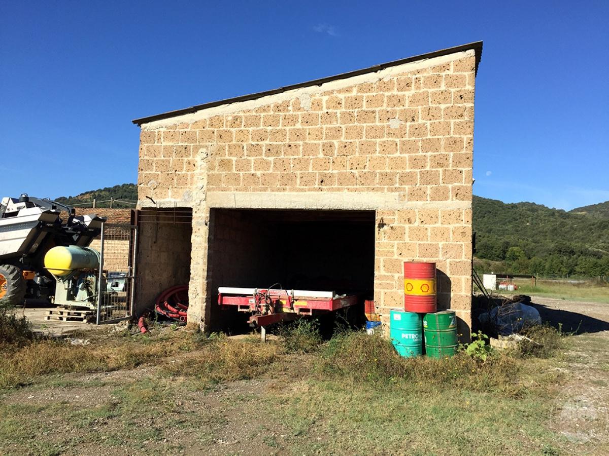 Vigneti e fabbricati agricoli a MONTALCINO in loc. Monte Amiata Scalo - Lotto 1 11