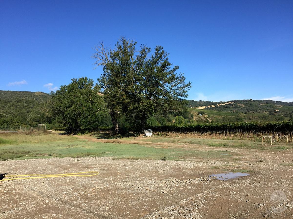 Vigneti e fabbricati agricoli a MONTALCINO in loc. Monte Amiata Scalo - Lotto 1 10