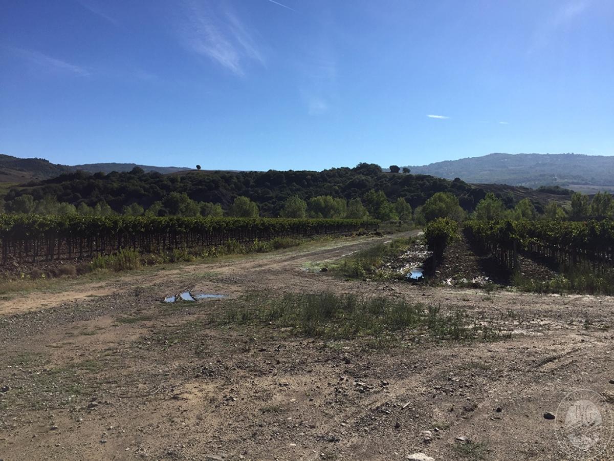 Vigneti e fabbricati agricoli a MONTALCINO in loc. Monte Amiata Scalo - Lotto 1 13