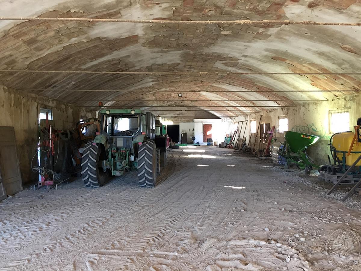 Vigneti e fabbricati agricoli a MONTALCINO in loc. Monte Amiata Scalo - Lotto 1 18