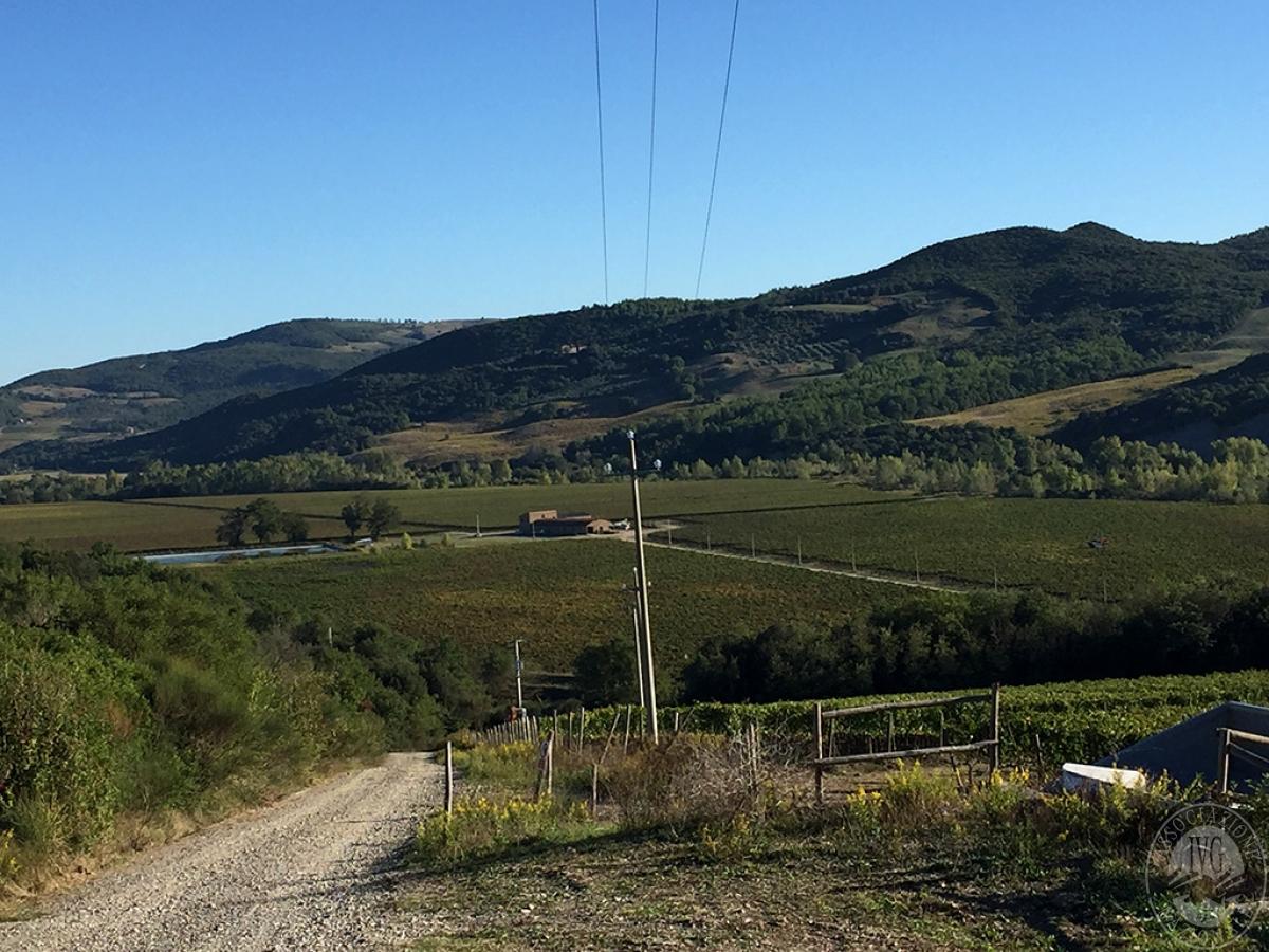 Vigneti e fabbricati agricoli a MONTALCINO in loc. Monte Amiata Scalo - Lotto 1 17