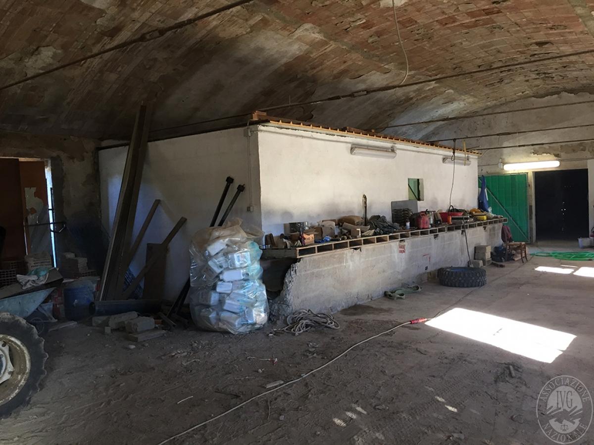 Vigneti e fabbricati agricoli a MONTALCINO in loc. Monte Amiata Scalo - Lotto 1 19