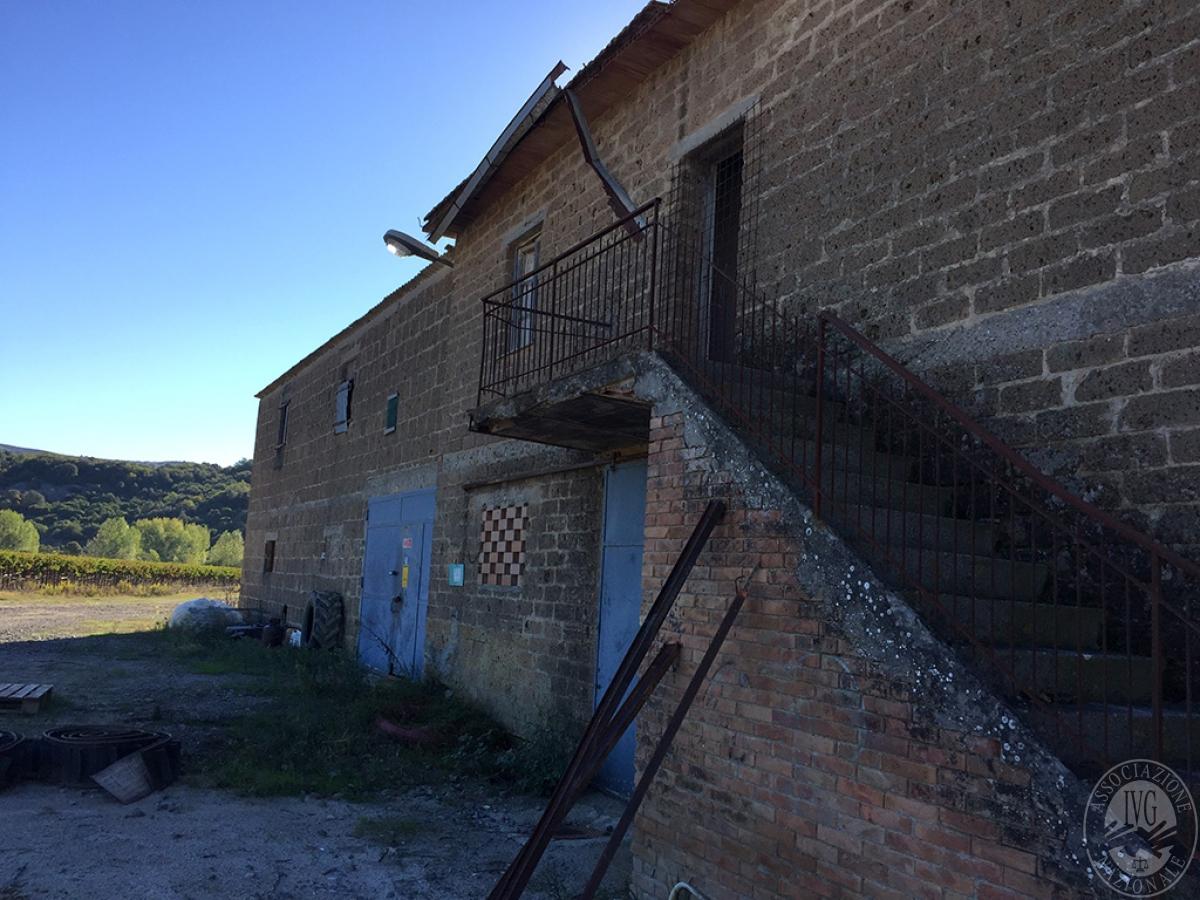 Vigneti e fabbricati agricoli a MONTALCINO in loc. Monte Amiata Scalo - Lotto 1 26