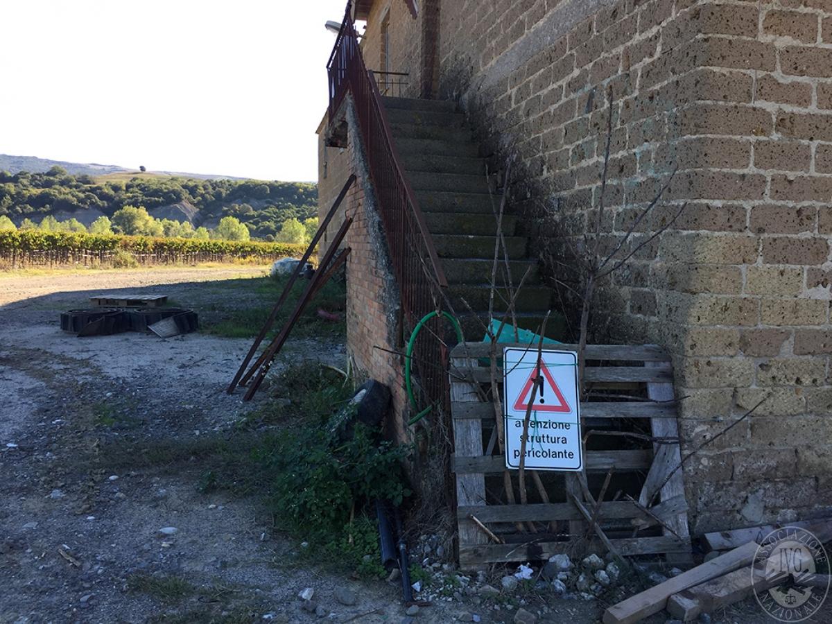 Vigneti e fabbricati agricoli a MONTALCINO in loc. Monte Amiata Scalo - Lotto 1 25