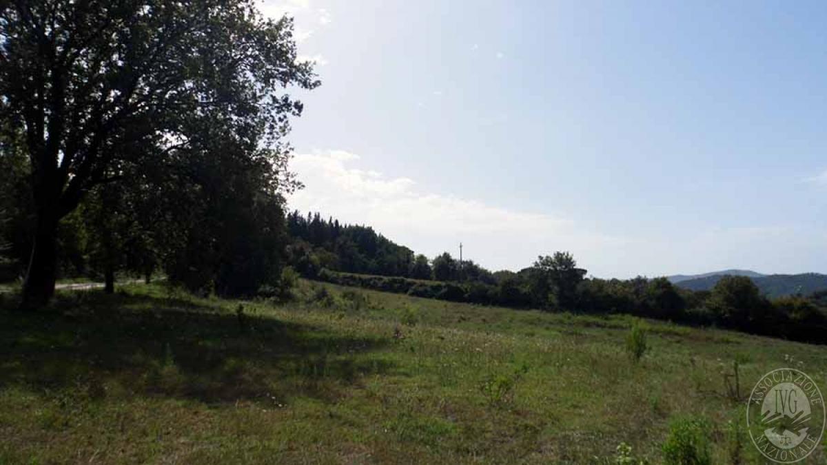 Terreni a MURLO in Montepescini - Lotto 2