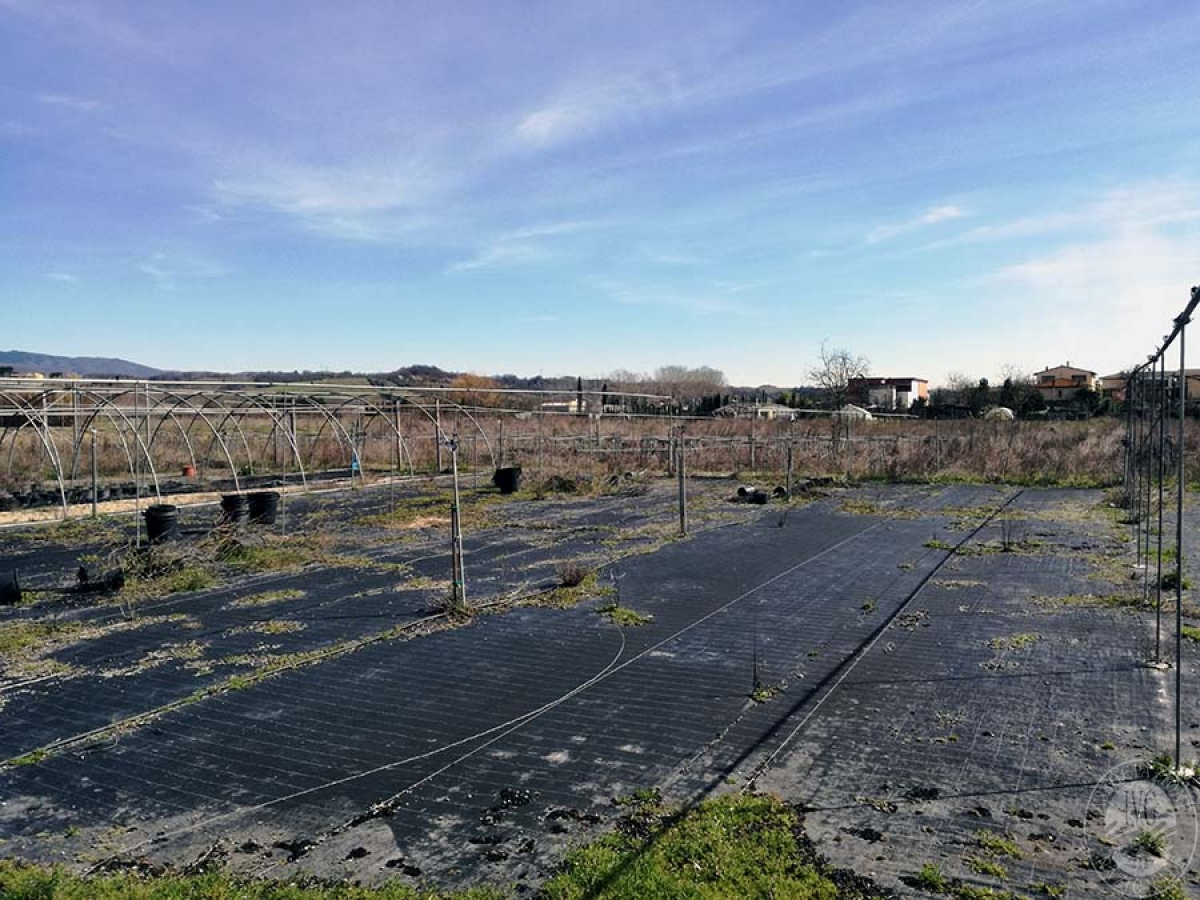 Terreni a MONTEVARCHI in Via delle Case Romole - Lotto 3 2