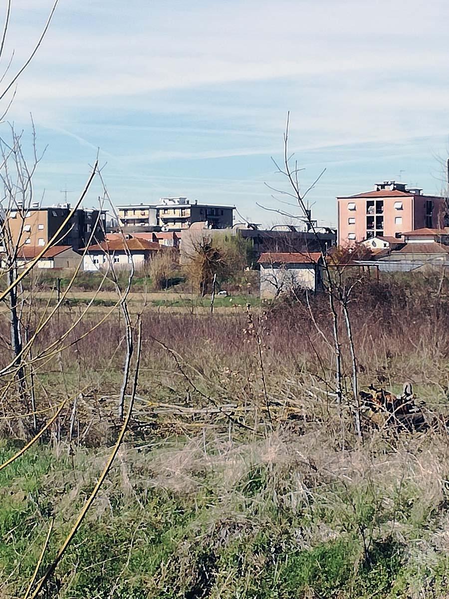 Terreni a MONTEVARCHI in Via delle Case Romole - Lotto 3 5