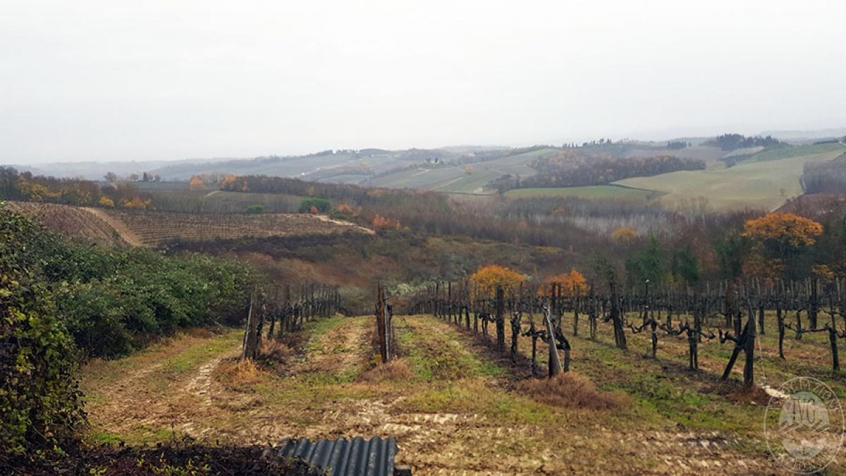 Terreni a SAN GIMIGNANO in loc. Cortennano - Lotto B