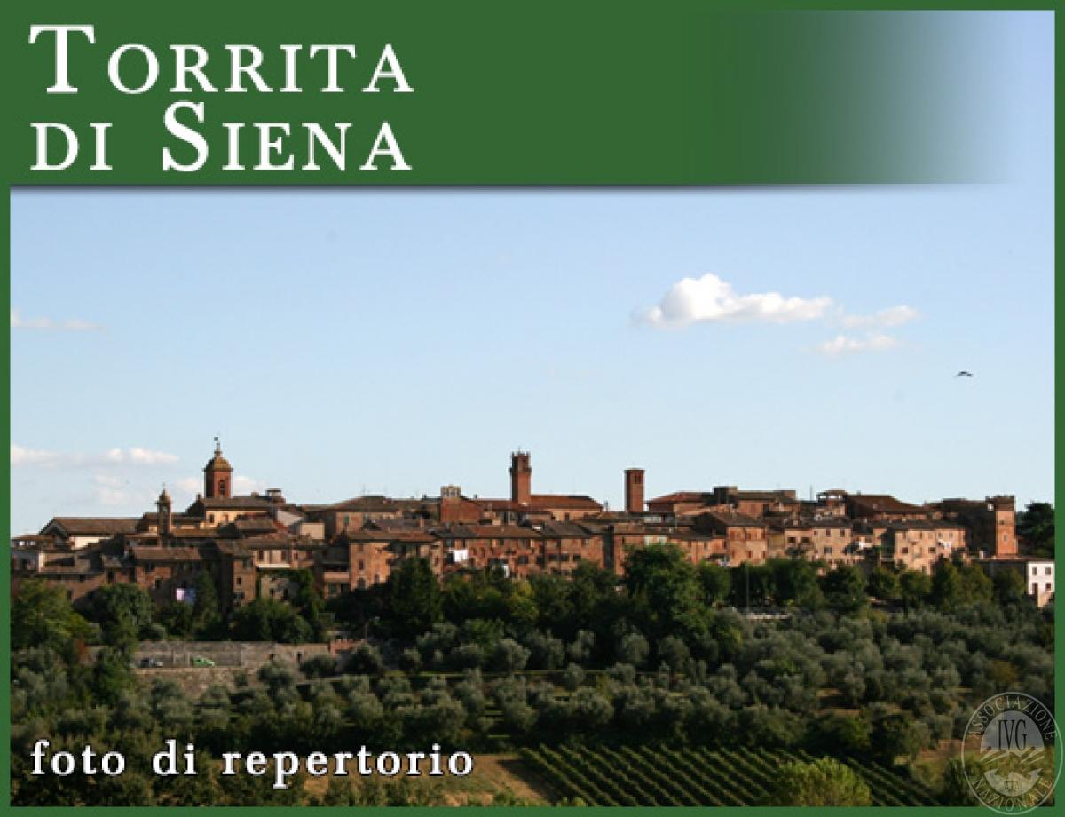 Locale commerciale a SINALUNGA in Via Matteotti - Lotto 6
