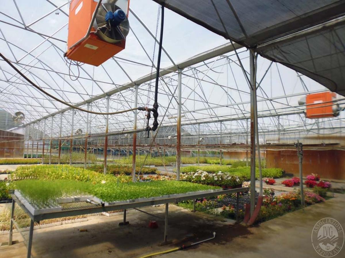 Serre per coltivazione ad AREZZO in loc. Chiassa Superiore - Lotto 2 3