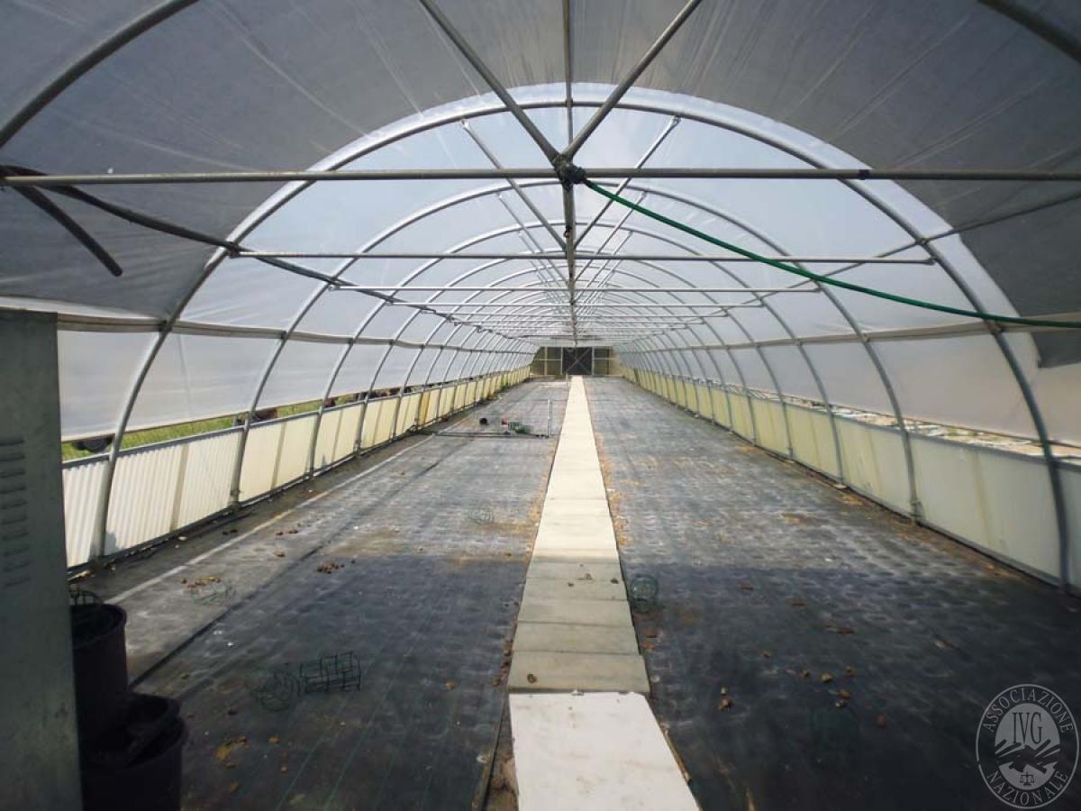 Serre per coltivazione ad AREZZO in loc. Chiassa Superiore - Lotto 2 7
