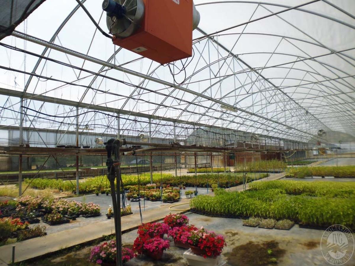 Serre per coltivazione ad AREZZO in loc. Chiassa Superiore - Lotto 2 8