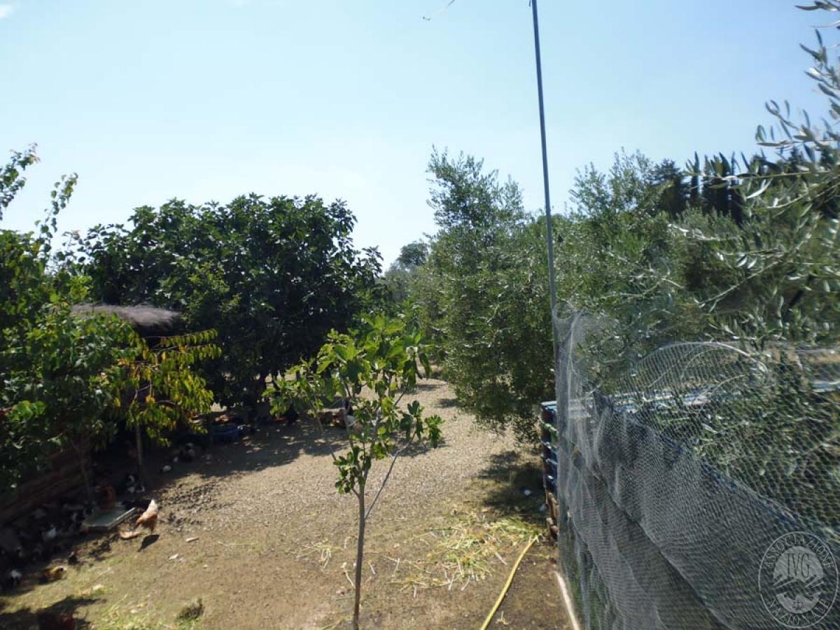 Serre per coltivazione ad AREZZO in loc. Chiassa Superiore - Lotto 2 10