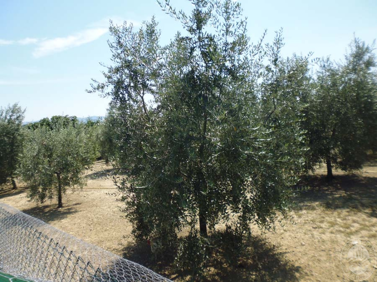 Serre per coltivazione ad AREZZO in loc. Chiassa Superiore - Lotto 2 12