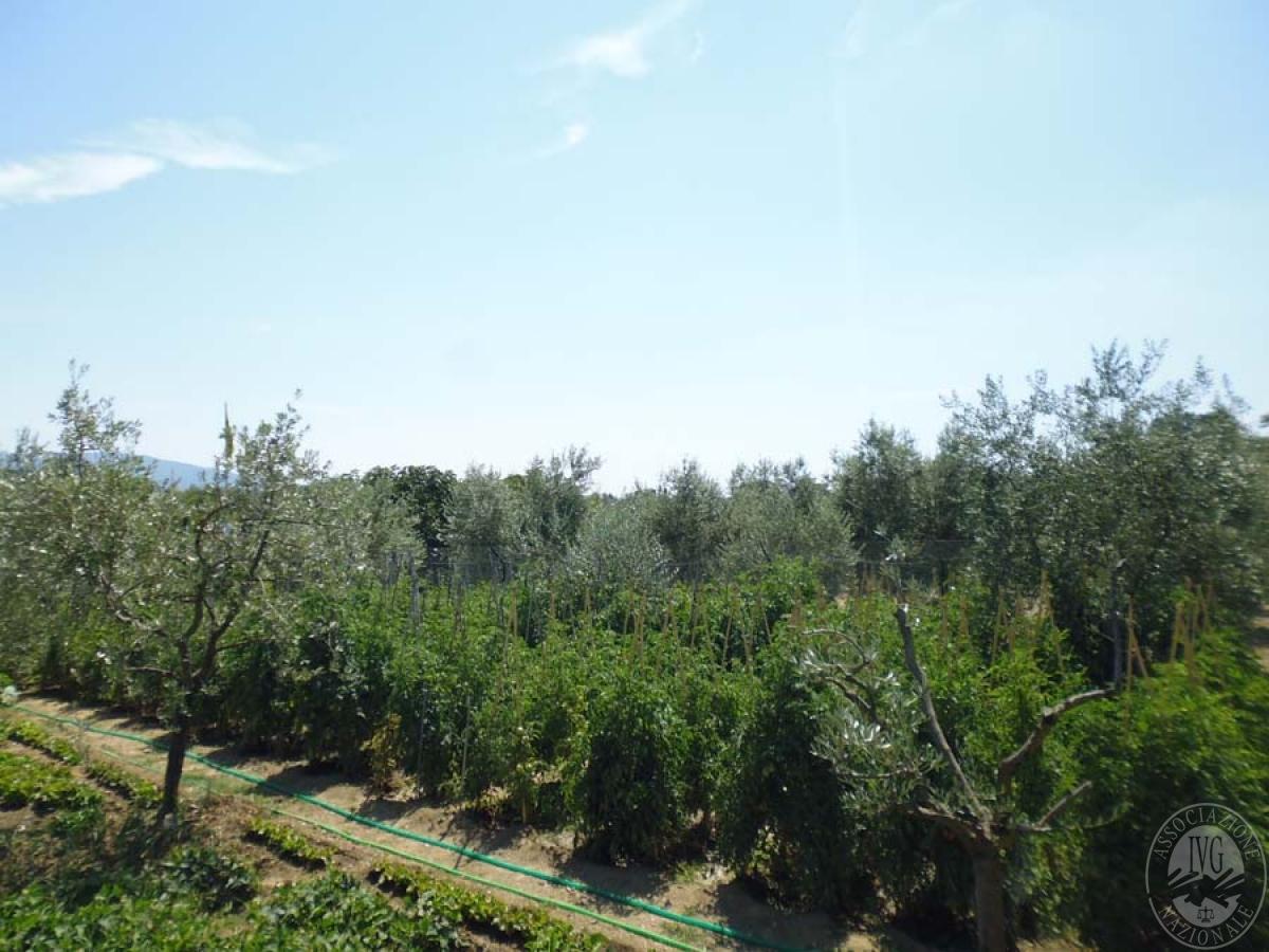 Serre per coltivazione ad AREZZO in loc. Chiassa Superiore - Lotto 2 14