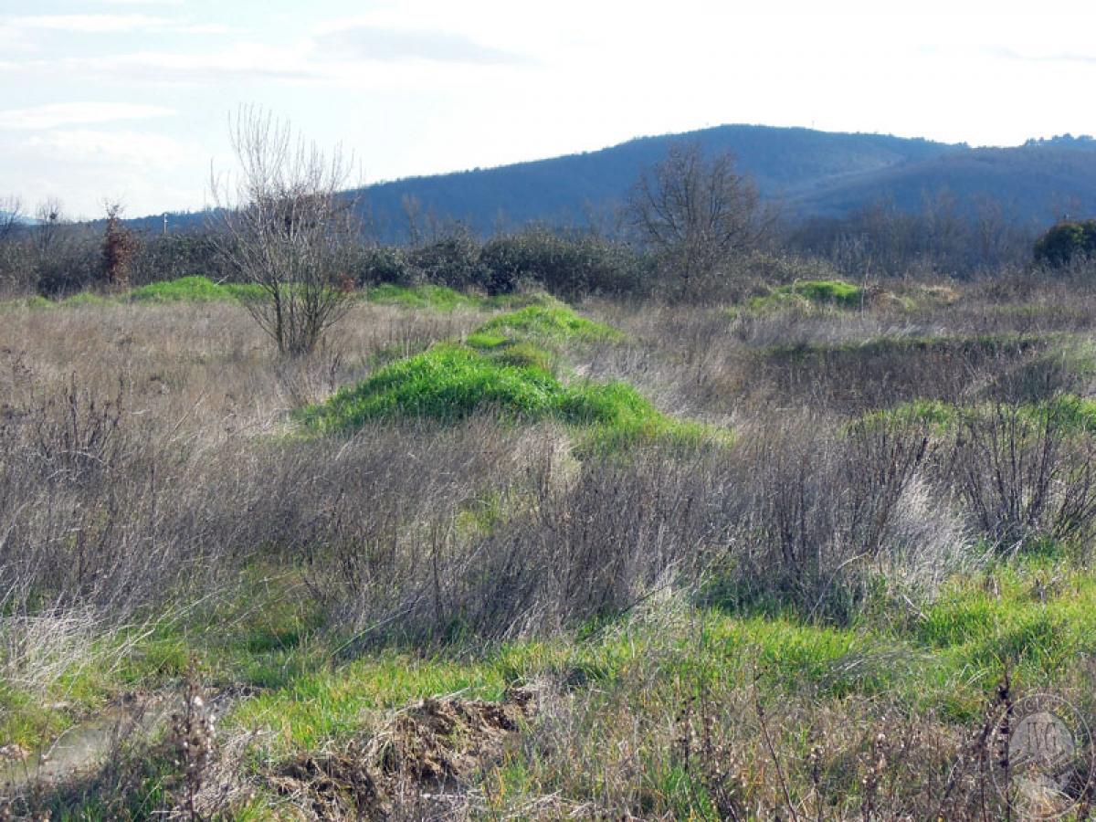 Terreni a Castiglion Fibocchi in loc. Moravia 7