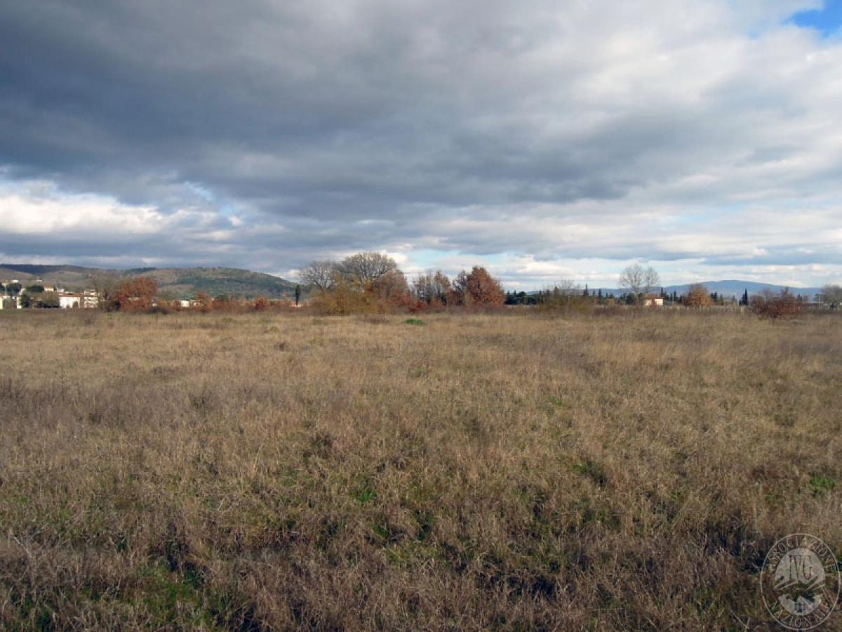 Terreni a Castiglion Fibocchi in loc. Moravia 9