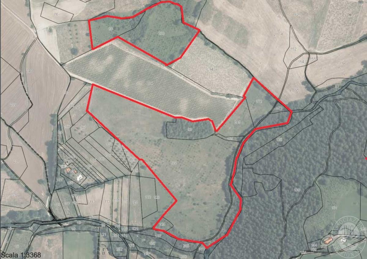 Terreni a SAN CASCIANO DEI BAGNI - Lotto 2