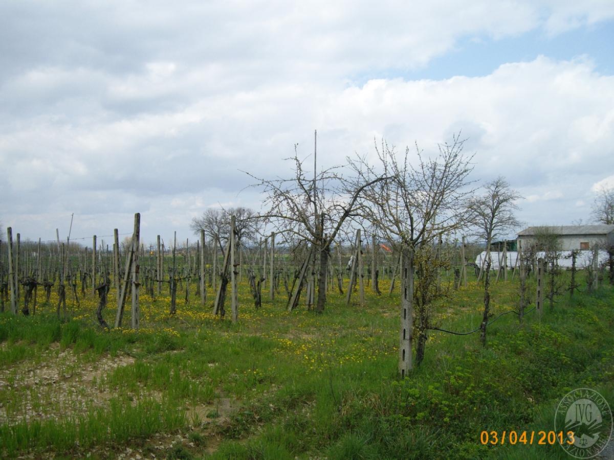 Terreni agricoli a MONTEPULCIANO in Via del Carriolo - Lotto 4 (D)